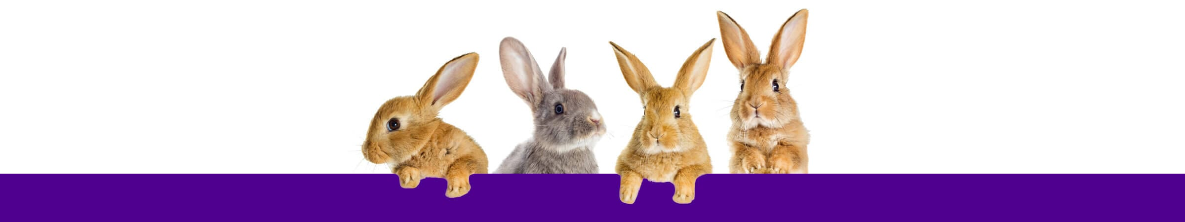 Rabbits and Guinea Pigs on the Lapin Luxury online pet store footer